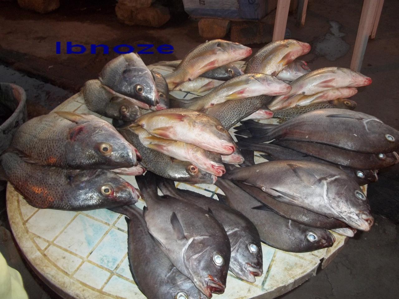 Des poissons à Soumbédioune